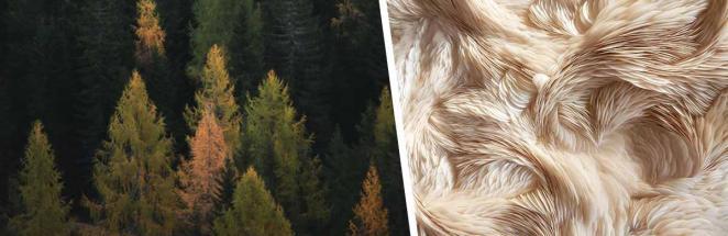 В Австралии нашли шерстяное дерево, которое двигается. Но разгадка этой аномалии — не для впечатлительных