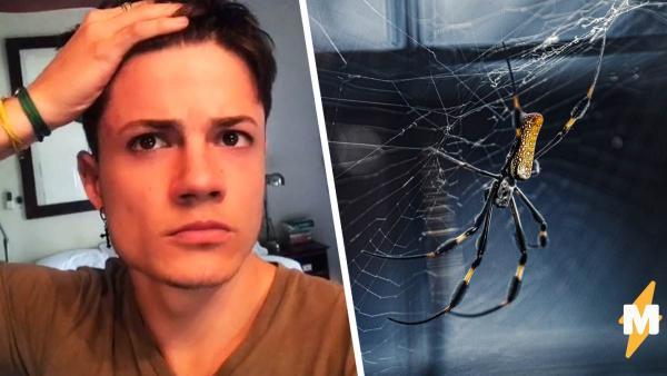 Блогер узнал что будет, если потрогать огромного паука.