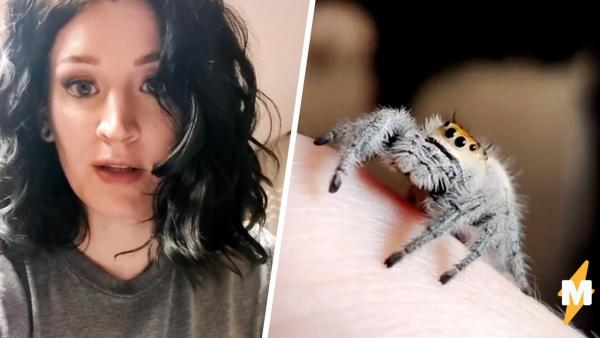 Хозяйка показала старого паука и арахнофобы сломались. Увидев, что с ними делает возраст – страх исчез