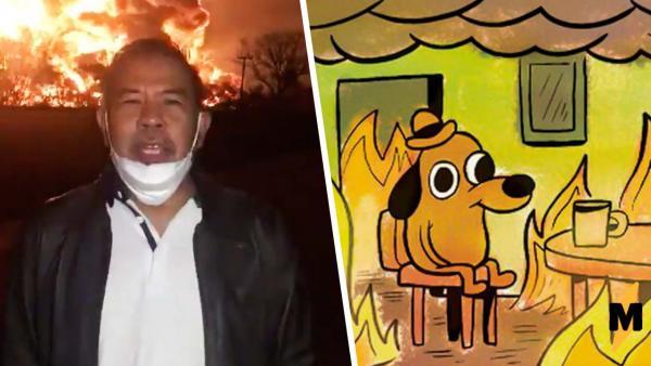 Помните мем с собакой, сидящий посреди пожара? Нашлось её реальное воплощение и это икона невозмутимости
