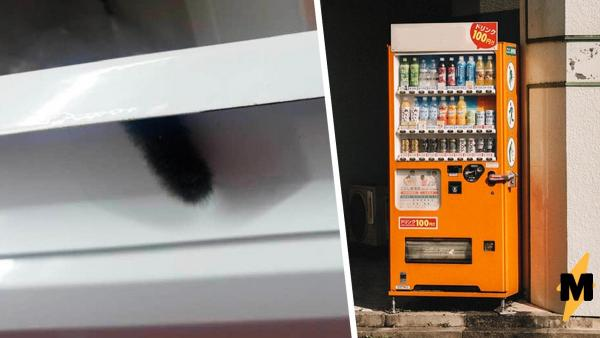Покупатели увидели в аппарате хвост кота, но правильно сделали.