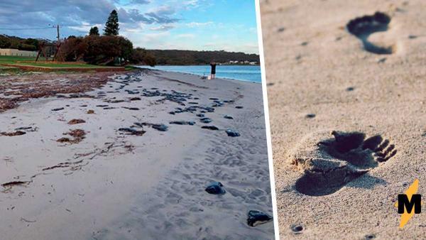 Пляж покрыли тёмные камни, но наступать на них не стоит. Они не только могут ответить, но и отравить