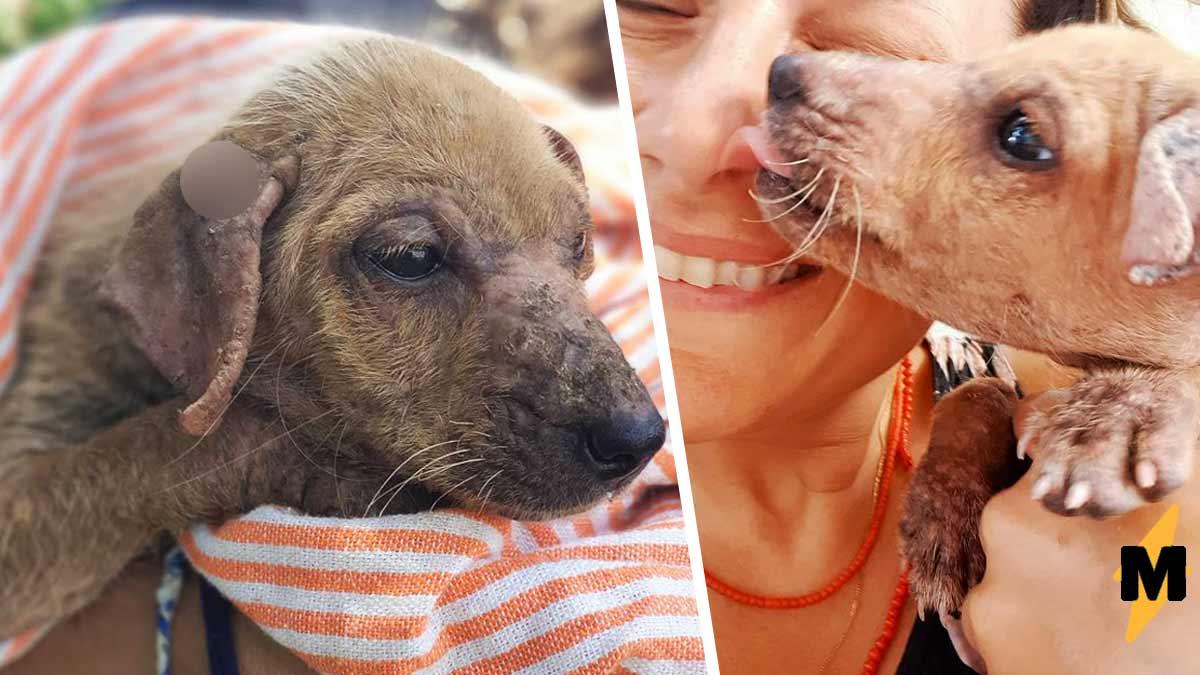 Лысый щенок, еле двигая лапами, вышел к прохожим. Они не ошиблись, забрав его, хотя он вырос в другое животное