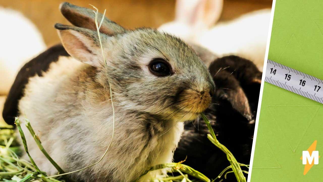 Соседки завели крольчат, но с ними что-то было не так. Обман открылся, когда животных уже было не поднять