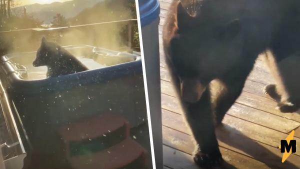 Медведь забрался в джакузи и сломал людей. Смотря на него, становится ясно -
