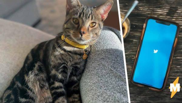 Журналист запостил фото коти и к лайкам получил деньги. Но ценность именно этой валюты мало кто поймёт