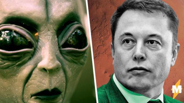 Илон Маск показал фото Марса, а там инопланетяне. Люди стоят теории, но объяснения этого превращаются в мемы