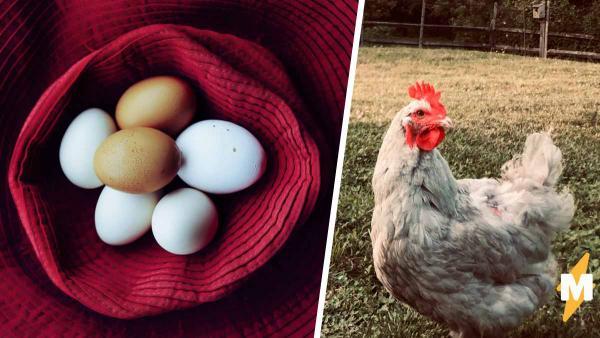 Пользователь Reddit поделился фото яйца, которое снесла его курица. Люди сразу поняли - курица из России