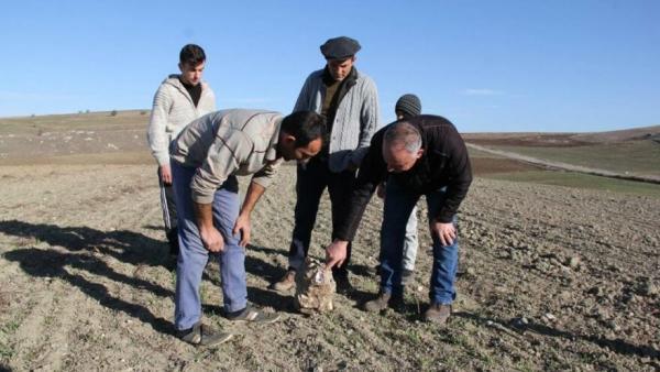 Фермер собрал урожай, а он оказался внеземным (буквально). Продав собранное, земледелец примерил работу богача