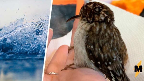 Женщина спасла птитцу и попала в роман Стивена Кинга. Пернатая жива, но есть ощущение, что это зомби