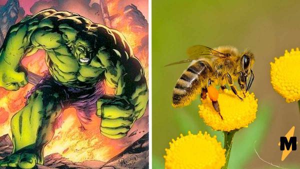 Мужчина гулял по лесу и увидел пчелу, которая превратилась в Халка. Он сделал фото, от которых хочется бежать