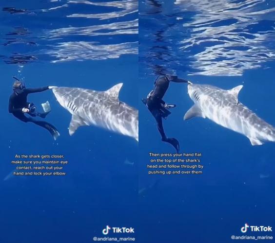 Ситуация: вы встретили в океане акулу. Биолог показала на видео с хищницей, что делать, и люди опешили