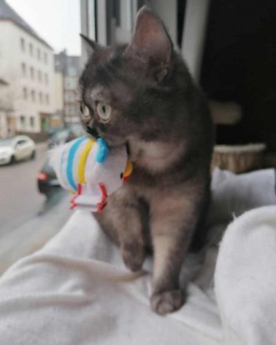 Кошку никто не хотел брать из приюта из-за её мордочки, и неудивительно.