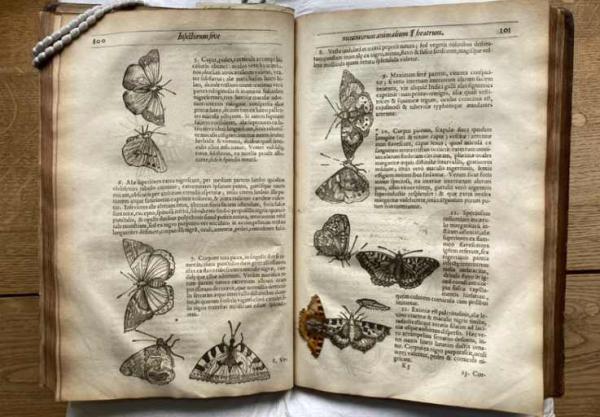 Библиотекарь открыла старинный фолиант и поверила в чудо. За 400 лет один из рисунков стал трёхмерным