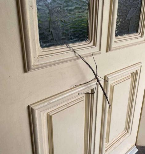 Мама нашла огромную ветку на двери и не удивилась, когда та решила уйти. Она поняла, гигант - новый член семьи