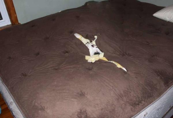 Хозяйка игнорировала дыру в кровати, пока не поняла, для чего она. Когда оттуда на неё глядела голова