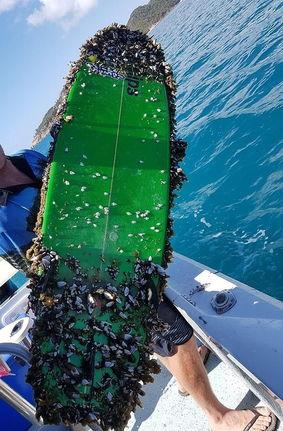 Сёрфер потерял доску, но рыбаки вернули ему пропажу. Правда, теперь девайс — настоящий кошмар трипофоба