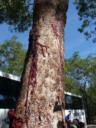 Блогер ударил дерево, а из него полилась кровь. Но не стоит торопиться отменять веганов, тут всё не так просто