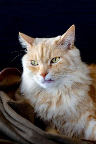 Бродячий кот выживал на улице, а попав к хозяину, преобразился. Фото после доказали - домашний уют творит чудо