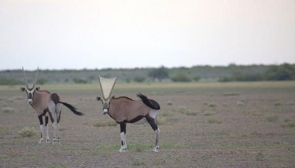 Паук создал передвижную ловушку, хакнув мир дикой природы. Теперь еда сама летит прямо в его сети (буквально)