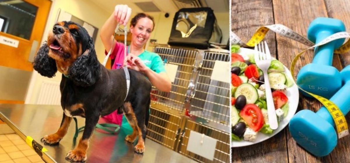 Пёс работал 5 лет на приз за похудение, и теперь его не узнать. Вы только посмотрите на этот шар (да) с лапами