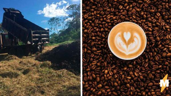 Не знаете, что делать с кофейней гущей? Выкиньте её прямо на землю, и может быть потом на ней вырастет дерево
