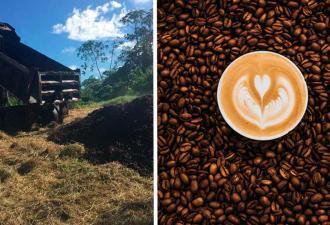 Не знаете, куда деть кофейную гущу? Вытряхните её из кружки прямо на землю, и результат вас удивит