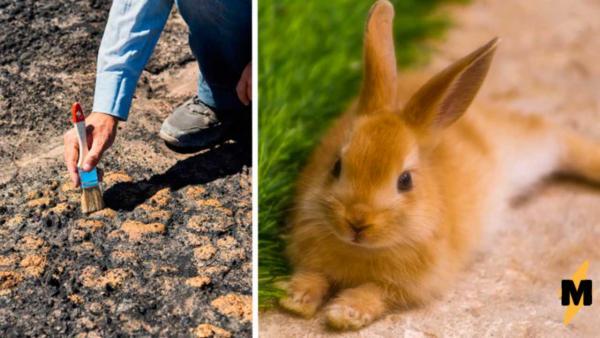 Учёные начали археологическую миссию, благодаря подсказке от кроликов. Что? Да, пушистики тоже любят историю