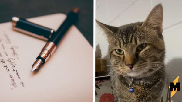 Кот ушёл из дома, а вернулся с запиской на шее. Прочитав её, хозяйка поспешила прицепить на котана ответ
