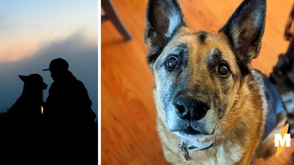 Хозяйка сказала собаке слово и понял: пёс считает её криворукой. Неуклюжесть человека для зверя стала командой