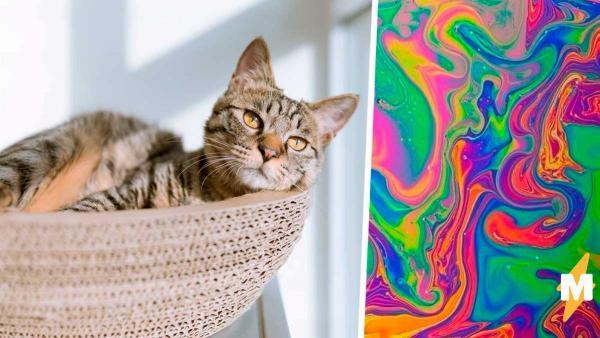 Хозяин сфотографировал питомцев и создал котическую иллюзию. Со снимка на него смотрел почти безголовый Ник