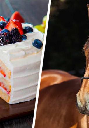 Хозяин устроил тусу на день рождения питомца. Именинником стал конь, а выражение его морды – мем про всех нас