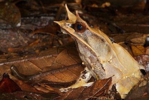 Сколько лягушек вы увидите среди листьев на фото? Отыскать невидимку сможет только самый внимательный