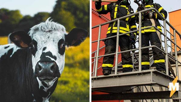 Спасатели думали, что нашли в поле брошенную корову. Через несколько мгновений она начала жалобно ржать