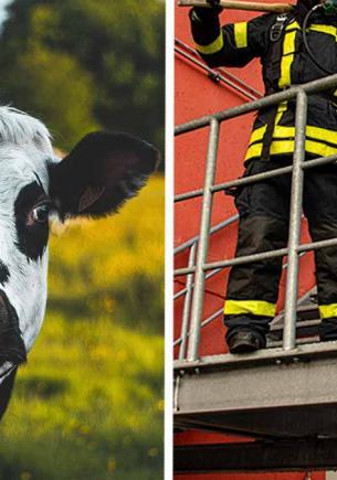 Спасатели нашли корову, а та заржала и стала лошадью. Увидев её фото, вы тоже можете перепутать животных