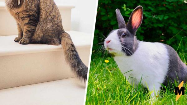 Прохожие увидели в траве кролика, но им прикидывался кое-кто другой. Оборотнем кот стал из-за особой мордочки