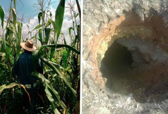 Фермер наткнулся на нору, но зря заглянул внутрь. Через 5 минут он уже бежал в дом, чтобы сообщить о находке