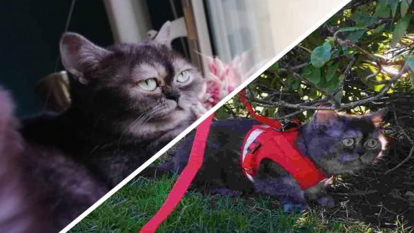 Кошку никто не хотел брать из приюта из-за её мордочки. Новая хозяйка нашла причину: это копия Grumpy Cat