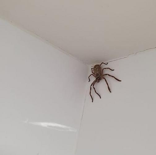 Женщина полезла в ванную и открыла способ, как помыться за 30 секунд. Паук на потолке — +100500 к ускорению