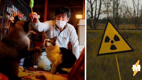 Кошатник не боится радиации, ведь 41 кот важнее. Он уверен: без хвостатых жизнь не та даже в зоне отчуждения
