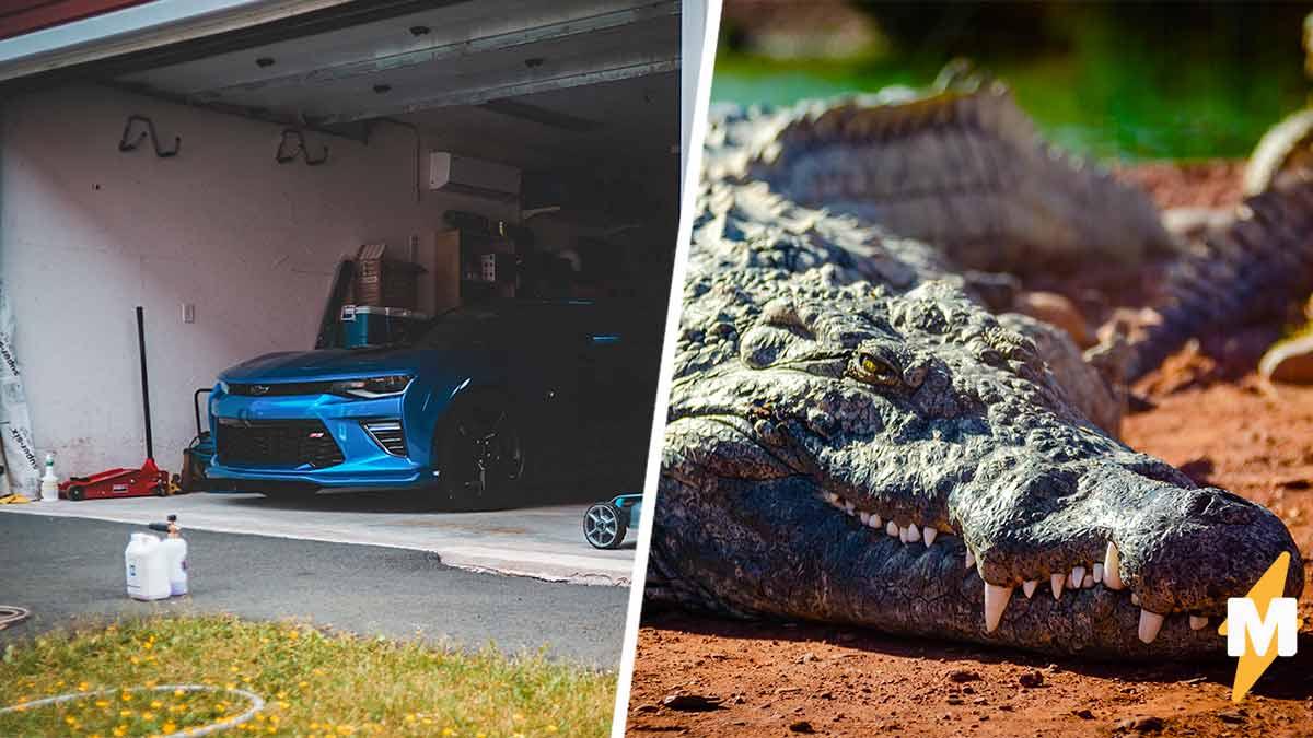 Муж молил жену помочь выгнать аллигатора из гаража, а та не верила. Зря  вернули дом семье только спасатели