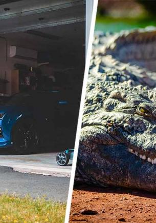 Муж молил жену помочь выгнать аллигатора из гаража, а та не верила. Зря – вернули дом семье только спасатели
