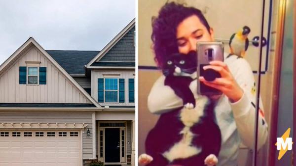 Лайфхак, как похудеть за месяц, проверила пухлая кошка. Достаточно застрять у соседей в гостях - буквально