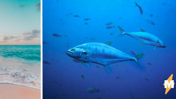 Прохожая нашла рыбу будто из мультика и рада, что не тронула. Один её кусь