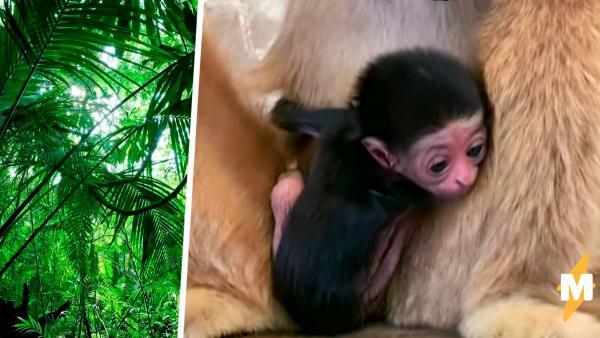 Обезьяна в зоопарке родила детёныша, а вместе с ним и загадку.