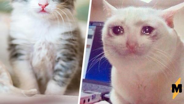 Котёнок проснулся и увидел, что братья и сёстры пропали. Его реакция - как у кота из мема, но это не фотошоп