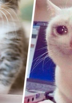 Котёнок проснулся и увидел, что братья и сёстры пропали. Его реакция — как у кота из мема, но это не фотошоп