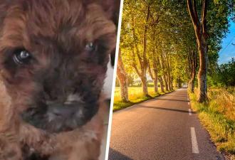 Сестре пришлось резко остановить машину. Путь преградил дворовый пёс, в чьих глазах она увидела своего брата