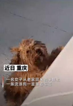 Хозяйка ехала в машине и резко затормозила. Движению помешал пёс, который узнал её и вернул