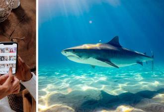 Ситуация: на вас плывёт акула. С биологом это случилось, но она не растерялась (и создала гайд)